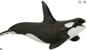 PAPO MARINOS - ORCA